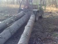 Problemfällung im Wald