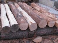 Holzpfähle
